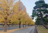 皇居前、和田倉噴水公園付近_2020年11月19日