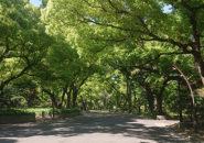 日比谷公園_2021年4月12日