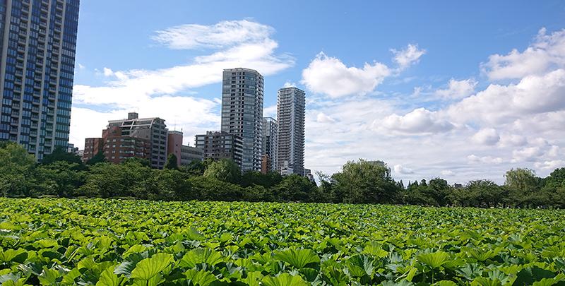 上野公園_2021年6月29日