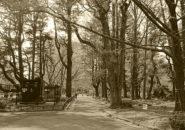 日比谷公園_2021年3月23日