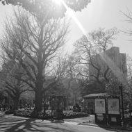 日比谷公園_2021年2月28日